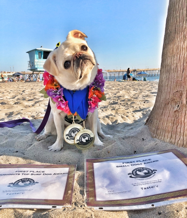 2018 World Dogs Surfing Championships Double Gold.