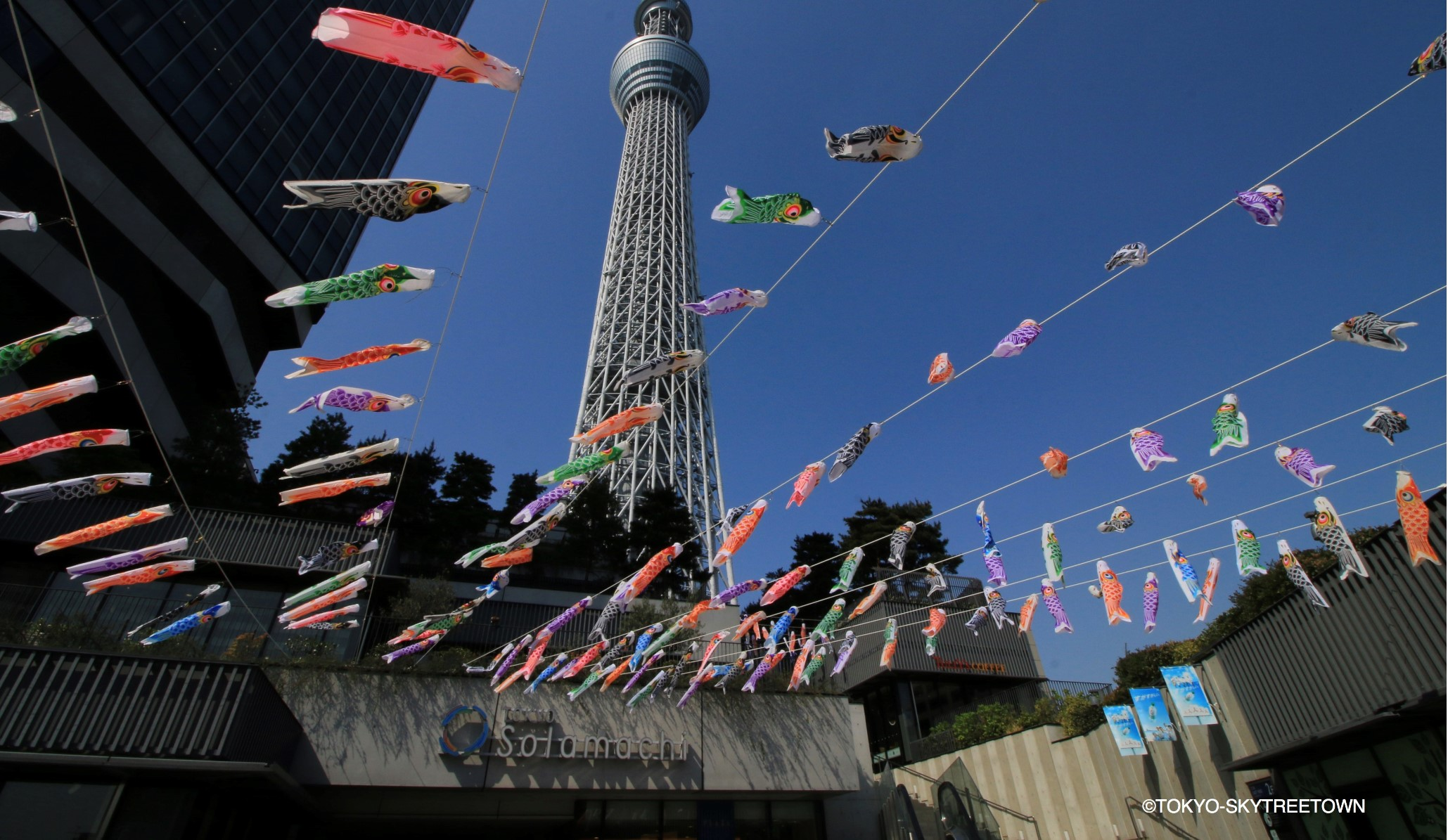 Carp Streamers At TOKYO SKYTREE TOWN
