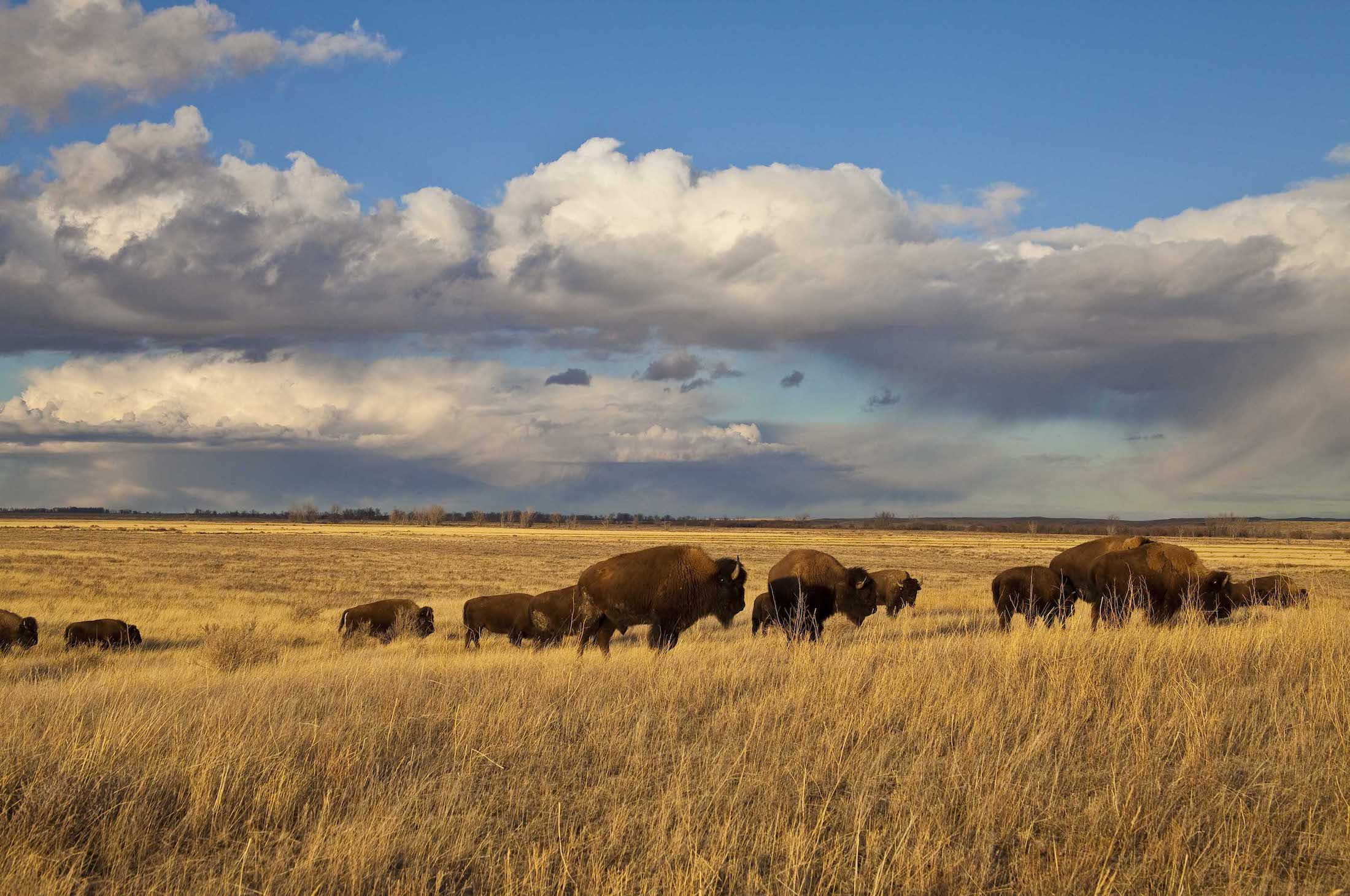 American Prairie Reserve is creating the largest nature reserve in the lower 48