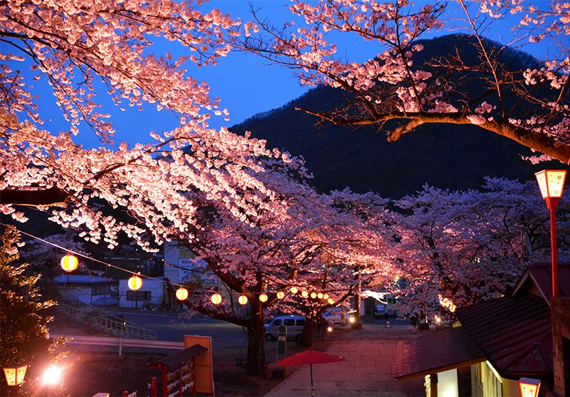 Illuminated Cherry Trees at Kawaji Onsen, Kinugawa Japan
